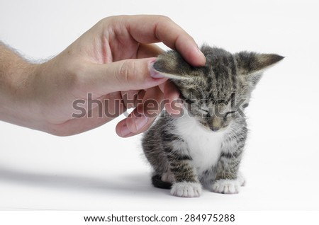 Kitten posing at camera. isolated on white background - stock photo