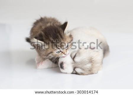Kitten&puppy - stock photo