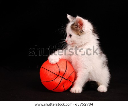 kitten put a paw on the basketball ball - stock photo