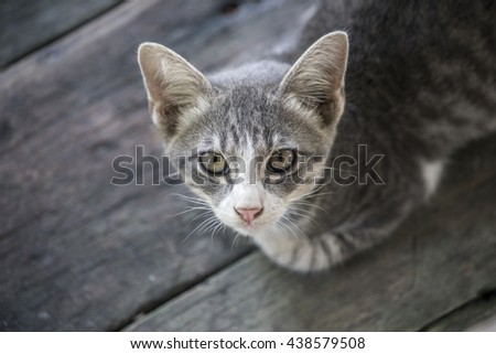 Kitten, resting cat on a floor in colorful blur background, cute funny cat close up, young playful cat at home, domestic cat, relaxing cat, cat resting, cat playing at home, elegant cat - stock photo