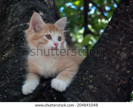 Kitten sitting in a tree close up - stock photo
