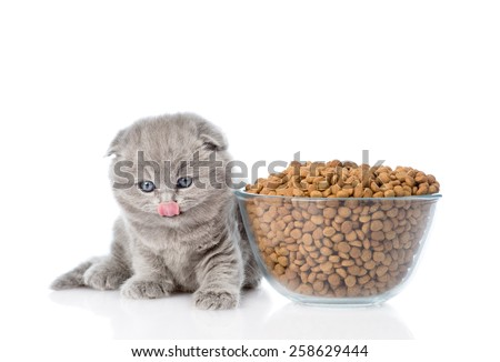 kitten sitting near a bowl of food. isolated on white background