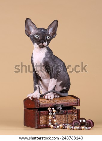 Kitten sitting on a box with jewelry