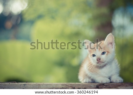 Kitten sitting on the wooden floor looking on the top - stock photo