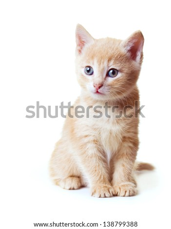 kitten sitting on white background