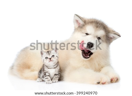 kitten sitting with licking puppy. isolated on white background