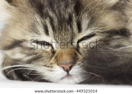 kitten sleeps - stock photo