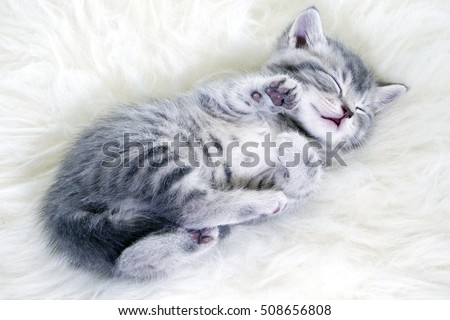 kitten sleeps