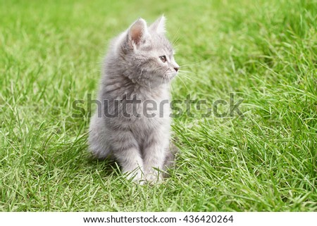kitten smiling - stock photo