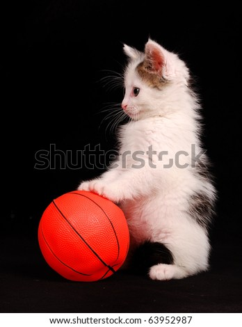 kitten standing on an orange ball - stock photo