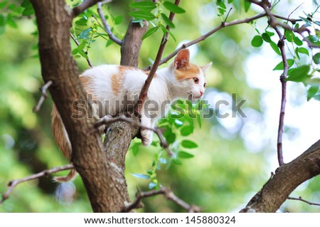 Kitten stuck on a tree - stock photo