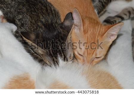 kitten suck up milk - stock photo
