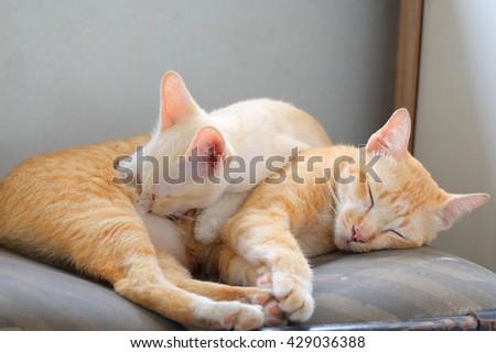 Kitten sucking milk in thailand - stock photo