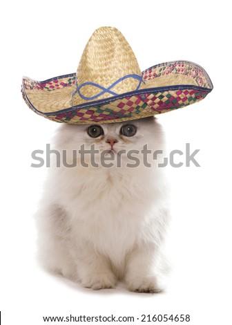 Kitten wearing a sombrero studio cutout - stock photo