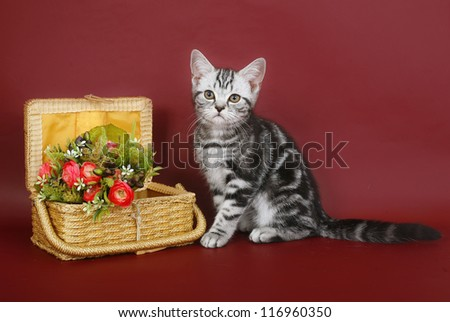 kitten with a basket and flowers. - stock photo