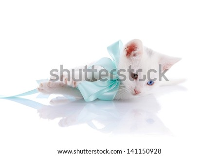 Kitten with a blue bow. White kitten with multi-colored eyes. Kitten on a white background. Small predator. Small cat.