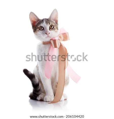 Kitten with a bow. The kitten with a pink tape. Multi-colored small kitten. Kitten on a white background. Small predator. Small cat.