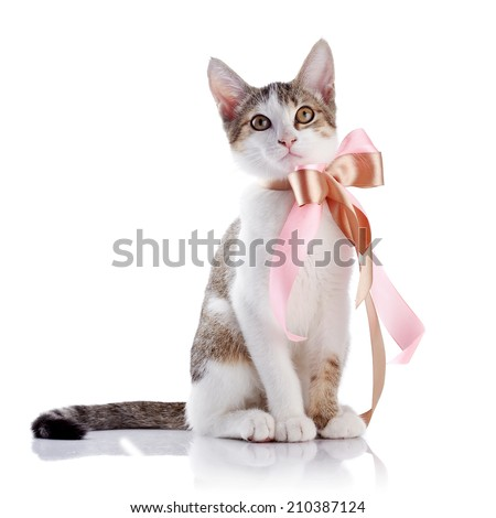 Kitten with a bow. The kitten with a tape. Multi-colored small kitten. Kitten on a white background. Small predator. Small cat.