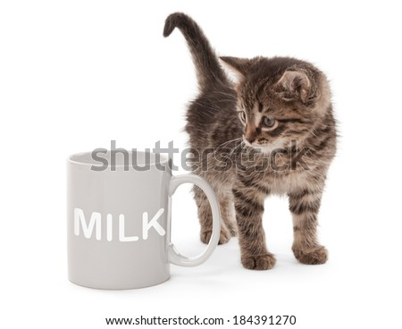 Kitten with a cup of milk isolated on white - stock photo