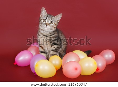 kitten with balloons on burgundy background.