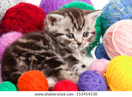 kitten with balls of threads. little kitten on white background. - stock photo