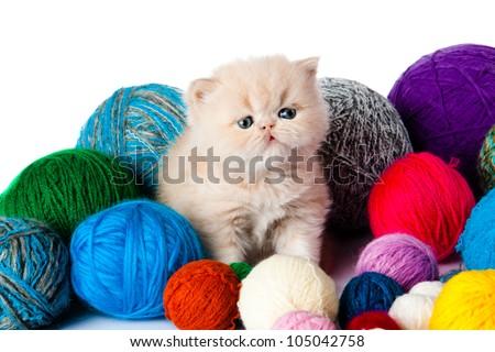 kitten with balls of threads. little kitten on white background. persian kitten - stock photo