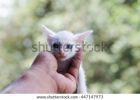 Kitten with blue eyes and misbehave