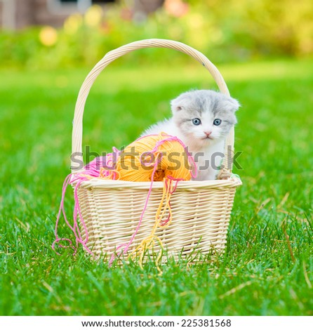 kitten with clews of thread  in basket on green grass - stock photo