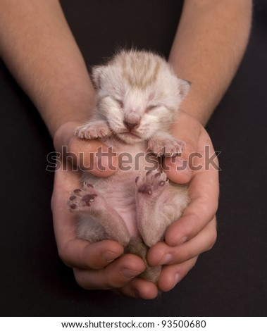 Kitten with eyes closed held by a child isolated on black - stock photo