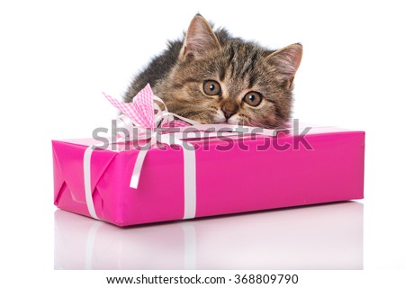Kitten with gift