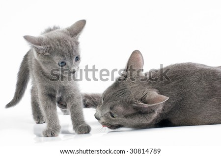 kitten with its mother
