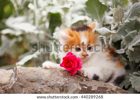 Kitten with one red rose - stock photo