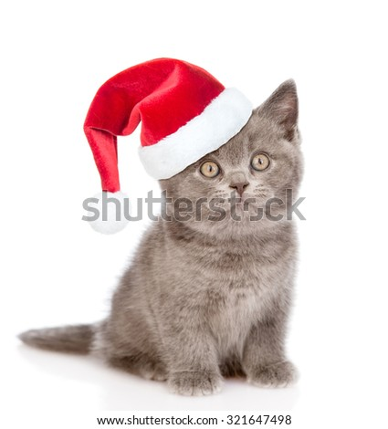 kitten with red christmas hat  looking up. isolated on white background - stock photo