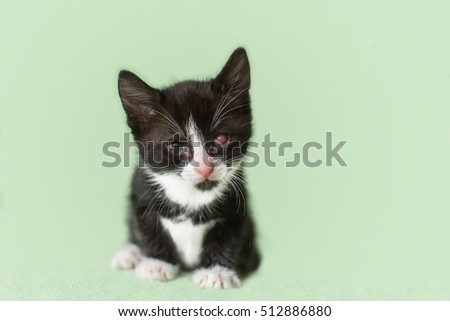 kitten with sick eyes. color black and white. Motley. hurts.