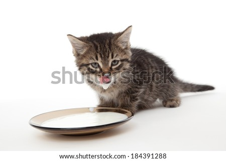 Kitten with sour cream on his lips and plate with sour cream - stock photo