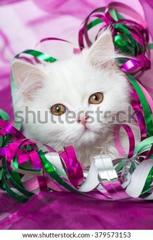 Kitten with streamers
