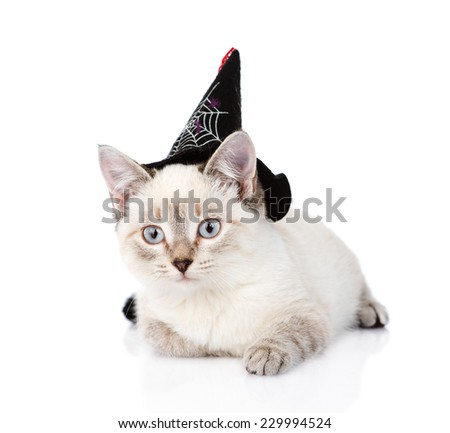 kitten with witch hat for halloween. isolated on white background - stock photo