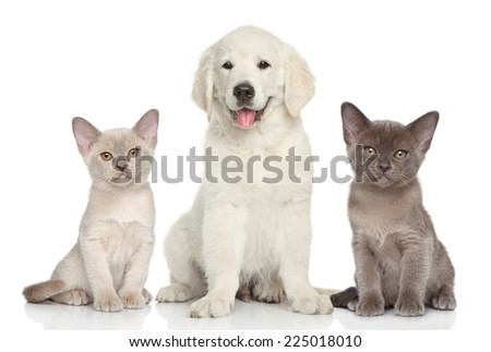Kittens and puppy on white background - stock photo