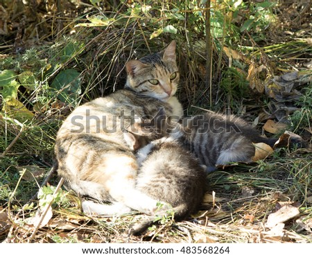 Kittens, cat in nature