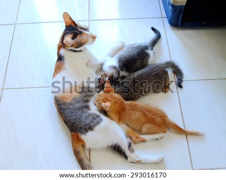 Kittens drinking milk from mother cat. - stock photo
