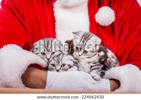 Kittens for Christmas. African Christmas Santa Claus holds four kittens while Santa sitting on the floor near the box with the kittens on Christmas Eve on an isolated white background - stock photo