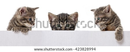 kittens in a box - stock photo