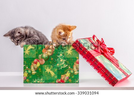 kittens in a Christmas box - stock photo