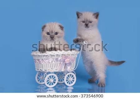 Kittens on a blue background with a baby carriage isolated