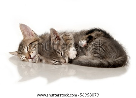 Kittens on a white background - stock photo
