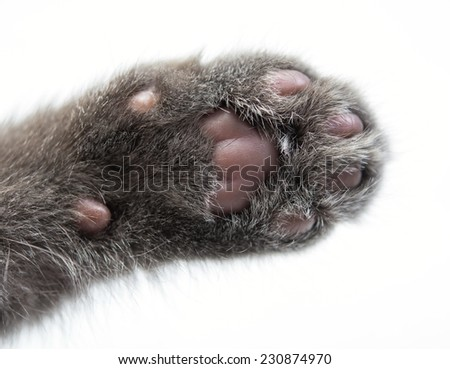 kittens paw close up - stock photo