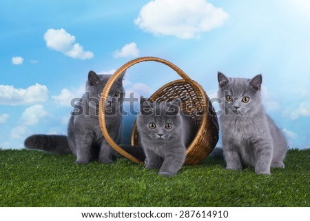 kittens playing in the grass on a sunny summer day - stock photo