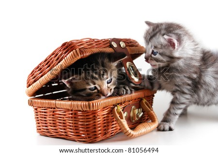 Kittens plays in basket - isolated on white background