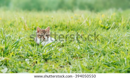 Kittens sitting on green meadow in summer and looking at camera, front view