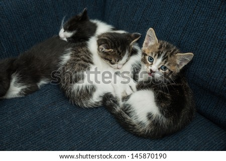 Kitties wrestling on couch - stock photo